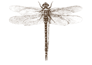 dragonfly-clip-art-6